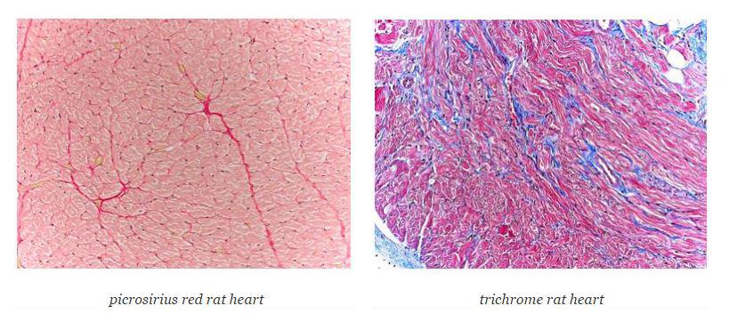 histology0117