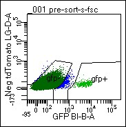 Figure. Identification of D1-GFP+ MSNs from the Mouse Brain Cells were dissociated from mouse ventral striatum, re-suspended, and submitted to FACs analysis. GFP+ cells are used for downstream applications, including RNA-seq and IP proteomics.