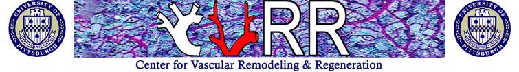 CVRR-Header